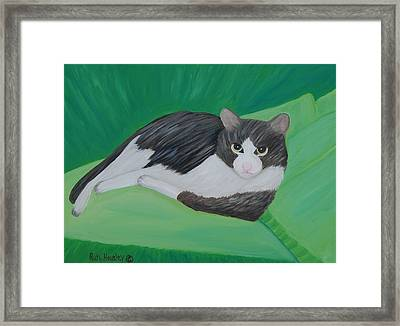 Cat Portrait  Sold Framed Print by Ruth  Housley