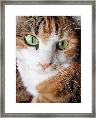 Cat Portrait Framed Print by Valia Bradshaw