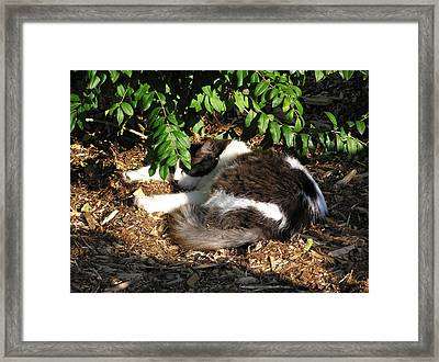 Cat Resting Under Tree Framed Print by Richard Mitchell