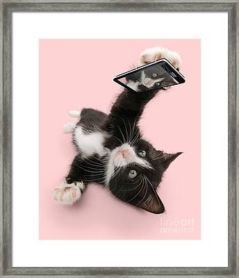 Cat Selfie Framed Print