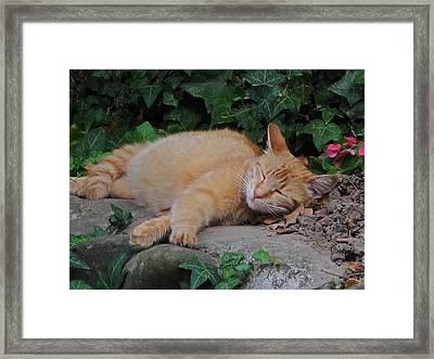 Cat Siesta Framed Print by Valia Bradshaw