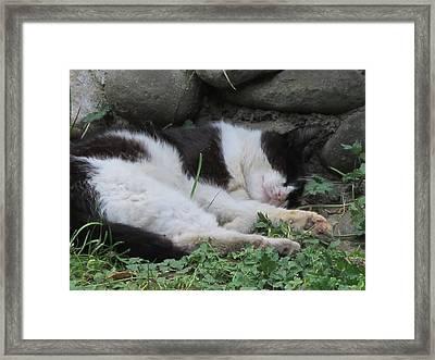 Cat Siesta2 Framed Print by Valia Bradshaw