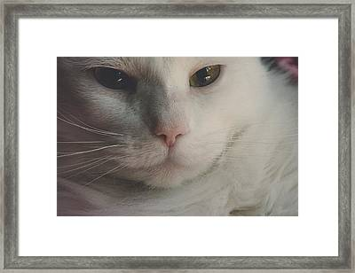 Cat - Silky - Pretty For The Camera Framed Print by Black Brook Photography