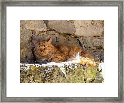 Cat Sleeping Framed Print by Bernard Jaubert
