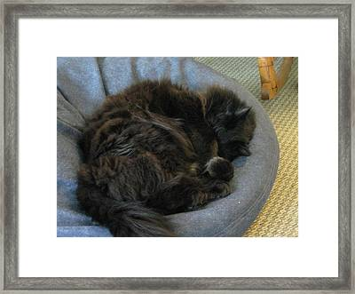 Framed Print featuring the photograph Cat Sleeping Eyes Covered by AJ Brown