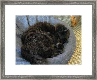 Cat Sleeping Eyes Covered Framed Print
