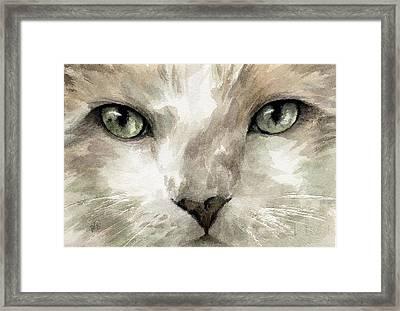 Cat Specific Disdain Framed Print