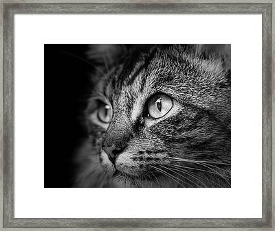 Cat Stare Bw Framed Print by Rick Deacon