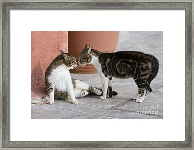 Cat Staring Contest Framed Print by Jean-Louis Klein & Marie-Luce Hubert