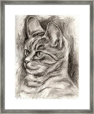 Cat Study Drawing No Three Framed Print by Hiroko Sakai