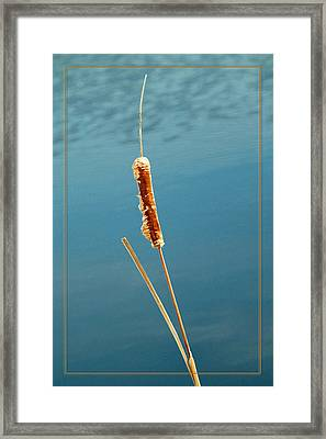 Cat Tail Framed Print
