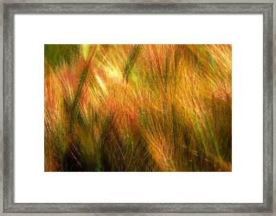 Cat Tails Framed Print by Paul Wear