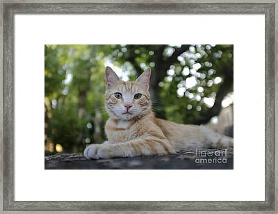 Cat Volterra Italy Framed Print by Edward Fielding