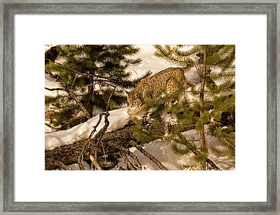 Cat Walk Framed Print