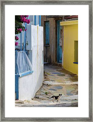 Cat Walking Across Path, Skopelos, Greece Framed Print