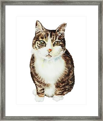 Framed Print featuring the painting Cat Watercolor Illustration by Irina Sztukowski