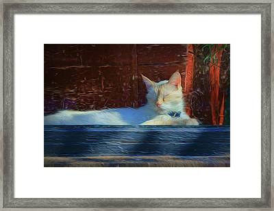 Cat - Window Framed Print by Nikolyn McDonald