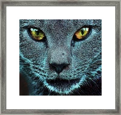 Cat With Golden Eyes Framed Print