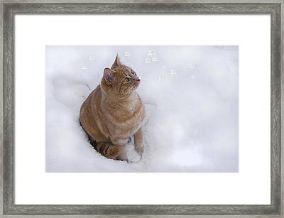 Cat With Snowflakes Framed Print