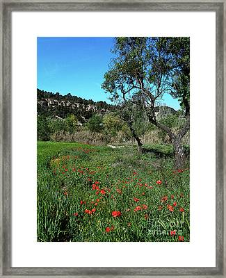 Catalan Countryside In Spring Framed Print by Don Pedro De Gracia