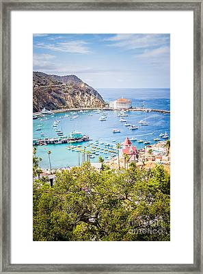 Catalina Island Avalon Bay Vertical Photo Framed Print by Paul Velgos