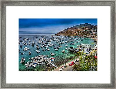 Catalina Island  Avalon Harbor Framed Print