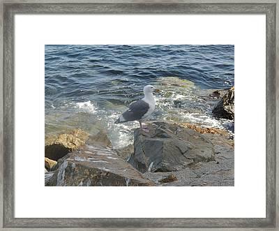 Catalina Island Native Framed Print