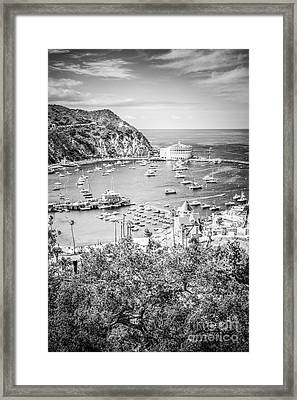 Catalina Island Vertical Black And White Photo Framed Print