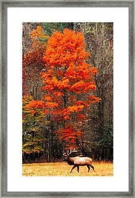 Cataloochee Color Framed Print