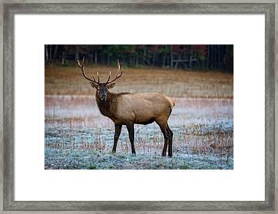 Cataloochee Elk Framed Print by Rick Berk