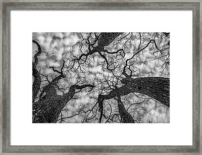 Catalpa And Altostrato Q Framed Print