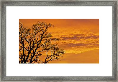 Catalpa Tree Sunrise Framed Print