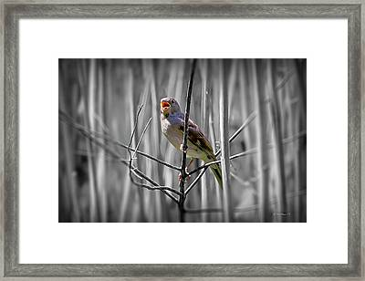 Catbird In The Reeds - Color Select Framed Print