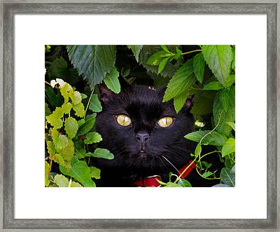 Catboo In The Wild Framed Print