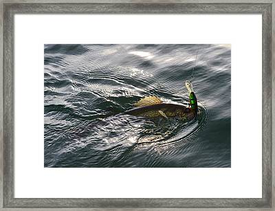 Catch Framed Print by David Parsons