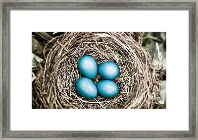 Catch Light On The Eggs Framed Print by Shelby  Young