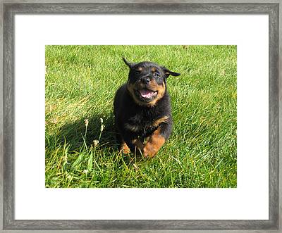 Catch Me If You Can Framed Print by Johanne Hammond