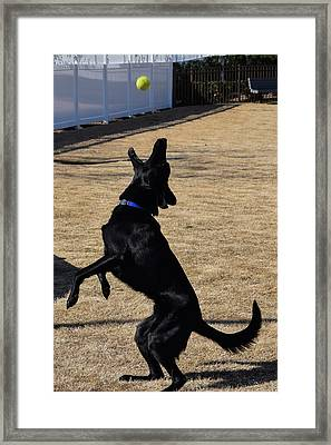 Catch Framed Print