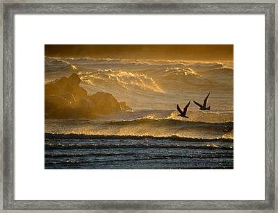Catch Of The Day - Cape Cod Bay Framed Print by Dianne Cowen