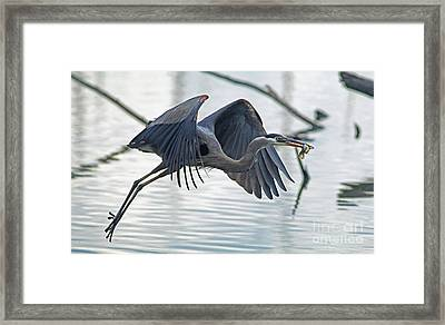 Catch Of The Day Framed Print