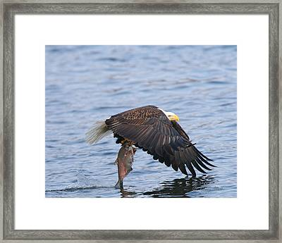 Catch Of The Day...for Both Of Us Framed Print by Gerry Sibell