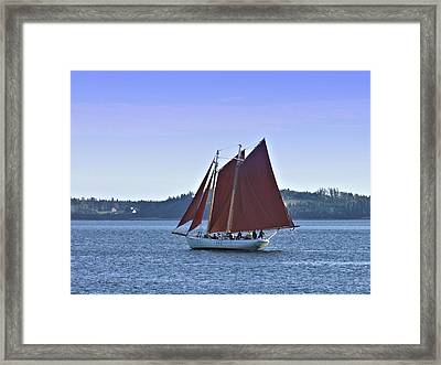 Catch The Breeze Framed Print