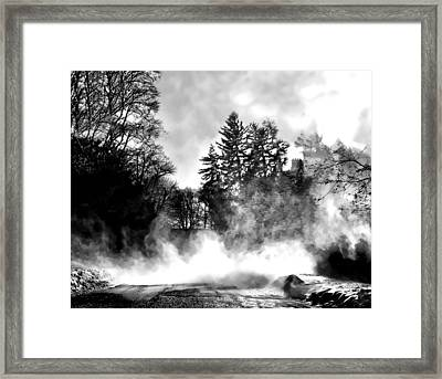 Sqaull Framed Print by Diana Angstadt