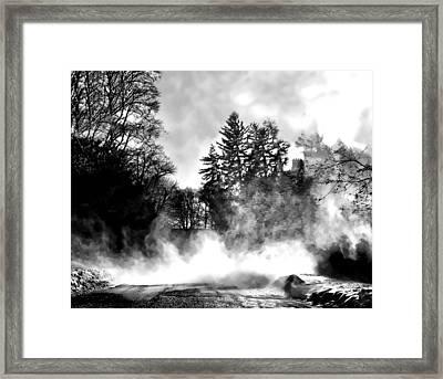 Sqaull Framed Print