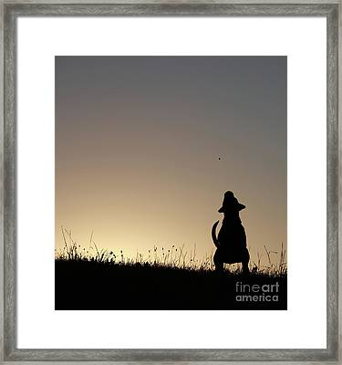 Catch The Goody Framed Print by Jana Behr