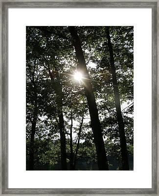 Catch The Sun Framed Print by Fareeha Khawaja