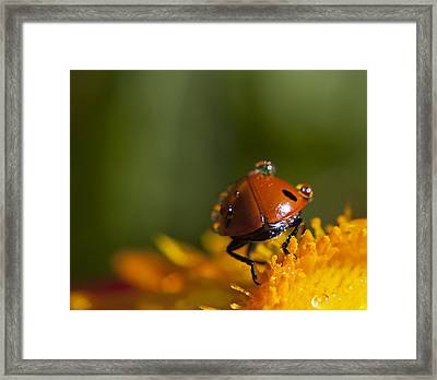 Catch Ya'll Laters Framed Print by Billie-Jo Miller