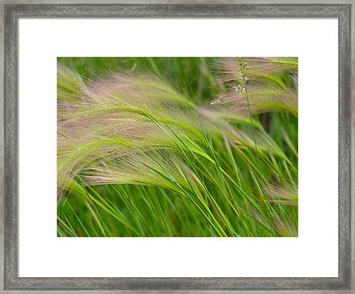 Catching A Breeze Framed Print by Scott Kingery