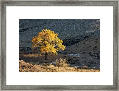 Catching Last Rays Framed Print