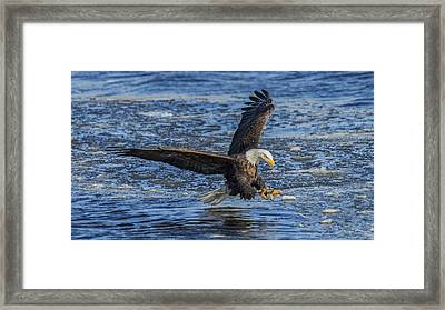 Catching Lunch Framed Print by E Mac MacKay